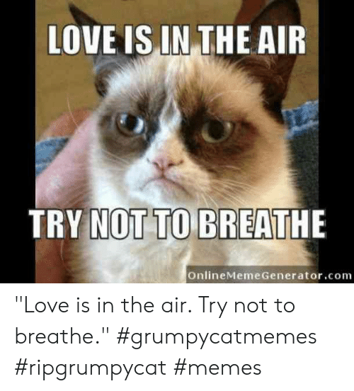 "generator: LOVE IS IN THE AIR  TRY NOT TO BREATHE  OnlineMeme Generator.com ""Love is in the air. Try not to breathe.""  #grumpycatmemes #ripgrumpycat #memes"