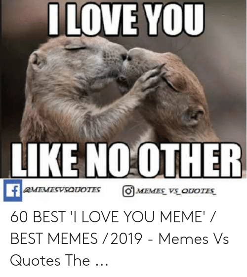 Love, Meme, and Memes: LOVE YOU  LIKE NO:OTHER  AMEMESVSOUOTES  MEVES VS ODOTES 60 BEST 'I LOVE YOU MEME' / BEST MEMES / 2019 - Memes Vs Quotes The ...