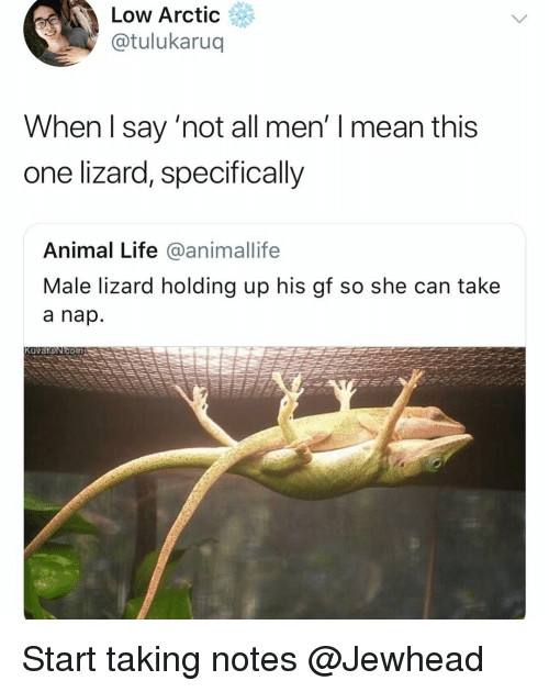 Funny, Life, and Animal: Low Arctic  @tulukaruq  When I say 'not all men' I mean this  one lizard, specifically  Animal Life @animallife  Male lizard holding up his gf so she can take  a nap  Kuvat@Ν  ΟΓη Start taking notes @Jewhead