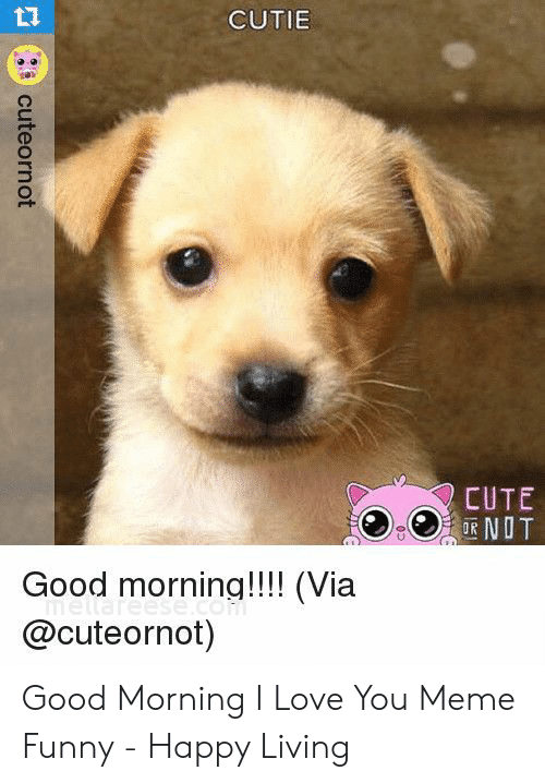 Cute, Funny, and Love: LT  CUTIE  CUTE  COR NOT  Good morninq!!!! (Via  @cuteornot) Good Morning I Love You Meme Funny - Happy Living