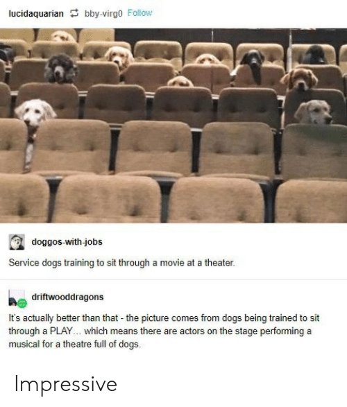 Dogs, Tumblr, and Jobs: lucidaquarian bby-virgo Follow  doggos-with-jobs  Service dogs training to sit through a movie at a theater.  driftwooddragons  It's actually better than that the picture comes from dogs being trained to sit  through a PLAY.. which means there are actors on the stage performing a  musical for a theatre full of dogs.  - Impressive