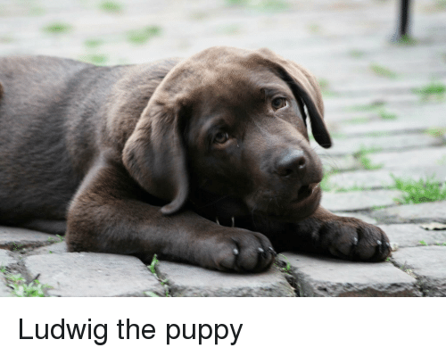 Puppy, The, and Ludwig: Ludwig the puppy