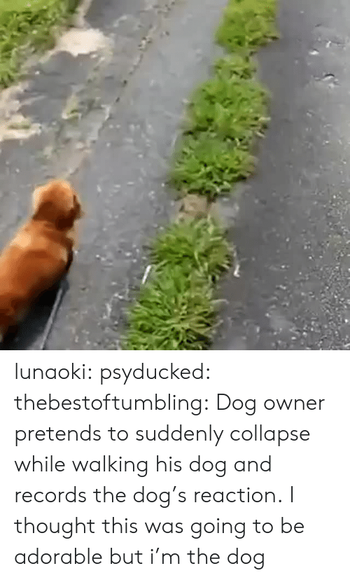 Tumblr, Blog, and Http: lunaoki: psyducked:  thebestoftumbling:    Dog owner pretends to suddenly collapse while walking his dog and records the dog's reaction.    I thought this was going to be adorable but  i'm the dog
