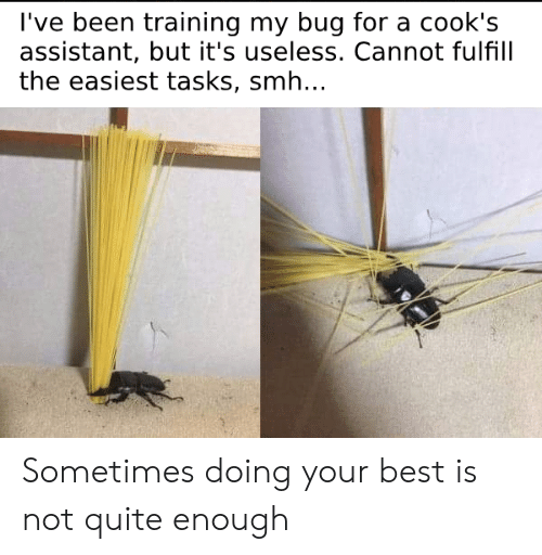 cooks: l've been training my bug for a cook's  assistant, but it's useless. Cannot fulfill  the easiest tasks, smh.. Sometimes doing your best is not quite enough