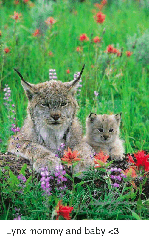 Memes, Baby, and 🤖: Lynx mommy and baby <3