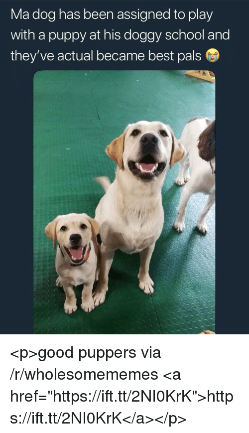 """School, Best, and Good: Ma dog has been assigned to play  with a puppy at his doggy school and  they ve actual became best pals <p>good puppers via /r/wholesomememes <a href=""""https://ift.tt/2NI0KrK"""">https://ift.tt/2NI0KrK</a></p>"""