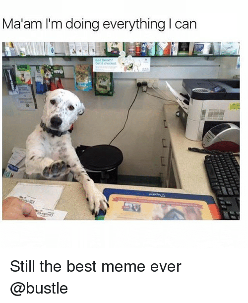Funny, Meme, and Best: Ma'am I'm doing everything I can Still the best meme ever @bustle