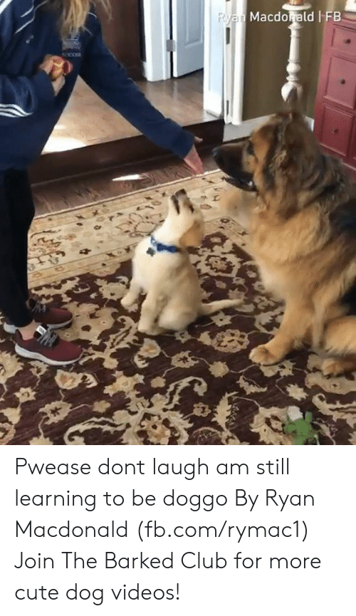 Club, Cute, and Dank: Macdorald FB Pwease dont laugh am still learning to be doggo By Ryan Macdonald (fb.com/rymac1)  Join The Barked Club for more cute dog videos!