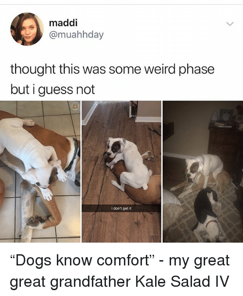 "Memes, Weird, and Guess: maddi  @muahhday  thought this was some weird phase  but i guess not  I don't get it ""Dogs know comfort"" - my great great grandfather Kale Salad IV"