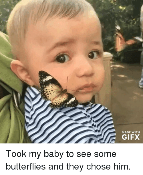 Baby, Him, and They: MADE WITH  GIFX Took my baby to see some butterflies and they chose him.