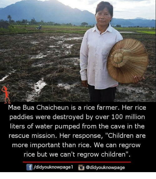 "Anaconda, Children, and Memes: Mae Bua Chaicheun is a rice farmer. Her rice  paddies were destroyed by over 100 million  liters of water pumped from the cave in the  rescue mission. Her response, ""Children are  more important than rice. We can regrow  rice but we can't regrow children"".  f/didyouknowpagel@didyouknowpage"
