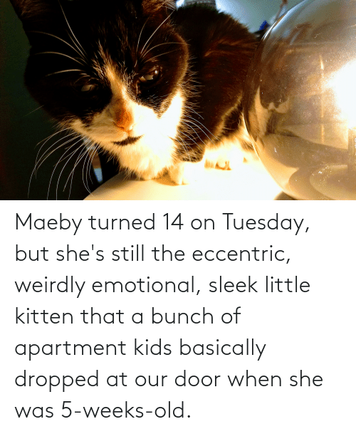 sleek: Maeby turned 14 on Tuesday, but she's still the eccentric, weirdly emotional, sleek little kitten that a bunch of apartment kids basically dropped at our door when she was 5-weeks-old.