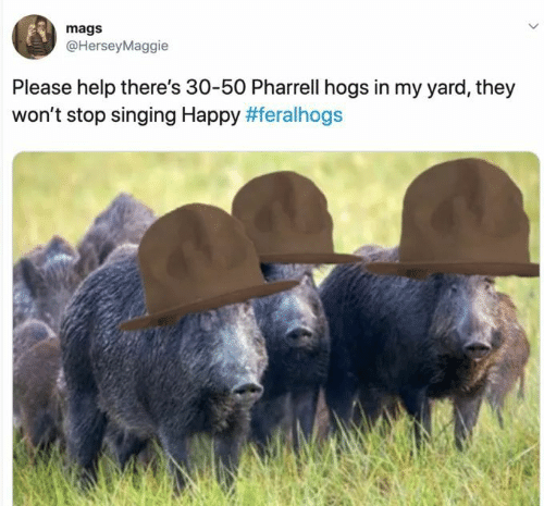 please help: mags  @HerseyMaggie  Please help there's 30-50 Pharrell hogs in my yard, they  won't stop singing Happy
