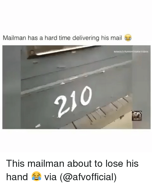 Memes, Videos, and Home: Mailman has a hard time delivering his mail  Ameora's Funnest Home videos This mailman about to lose his hand 😂 via (@afvofficial)