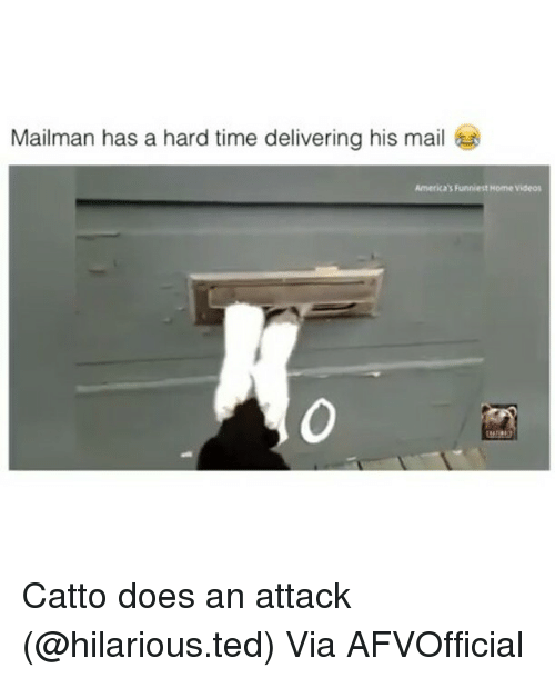 home video: Mailman has a hard time delivering his mail  America's Funniest Home video Catto does an attack (@hilarious.ted) Via AFVOfficial