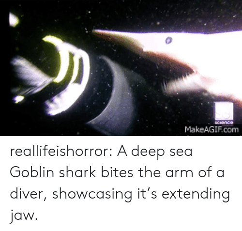 Makeagif Com: MakeAGIF.com reallifeishorror:  A deep sea Goblin shark bites the arm of a diver, showcasing it's extending jaw.
