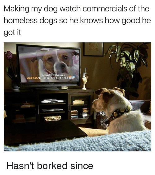Aspca: Making my dog watch commercials of the  homeless dogs so he knows how good he  got it  Join ASPCA org  ASPCA 1-888-514-4443 Hasn't borked since