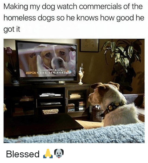 Aspca: Making my dog watch commercials of the  homeless dogs so he knows how good he  got it  1.388.514.4443 EG  ASPCA Blessed 🙏🐶