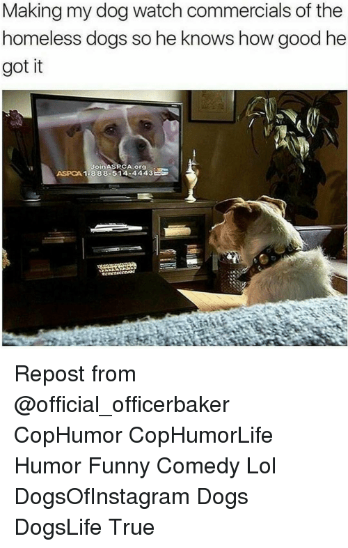 Aspca: Making my dog watch commercials of the  homeless dogs so he knows how good he  got it  Join  ASPCA 1-888-514 44433 Repost from @official_officerbaker CopHumor CopHumorLife Humor Funny Comedy Lol DogsOfInstagram Dogs DogsLife True