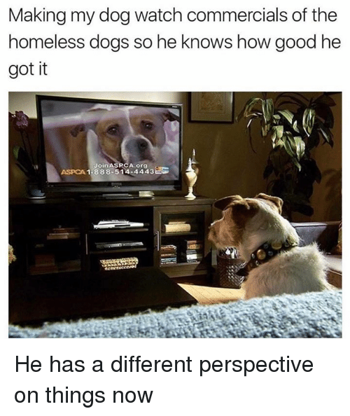 Aspca: Making my dog watch commercials of the  homeless dogs so he knows how good he  got it  1.388.514.4443  ASPCA He has a different perspective on things now
