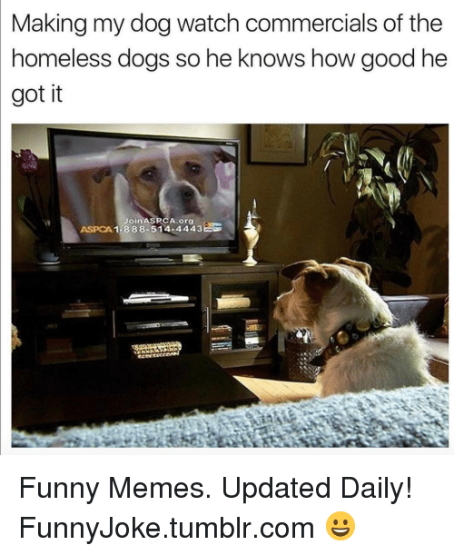 Aspca: Making my dog watch commercials of the  nomeless dogs so he Knows how good he  got it  JoinASRCA org  ASPCA 1-888-514-4443 Funny Memes. Updated Daily! ⇢ FunnyJoke.tumblr.com 😀