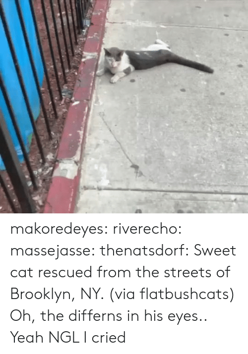 Instagram, Streets, and Tumblr: makoredeyes:  riverecho: massejasse:  thenatsdorf: Sweet cat rescued from the streets of Brooklyn, NY. (via flatbushcats) Oh, the differns in his eyes..     Yeah NGL I cried