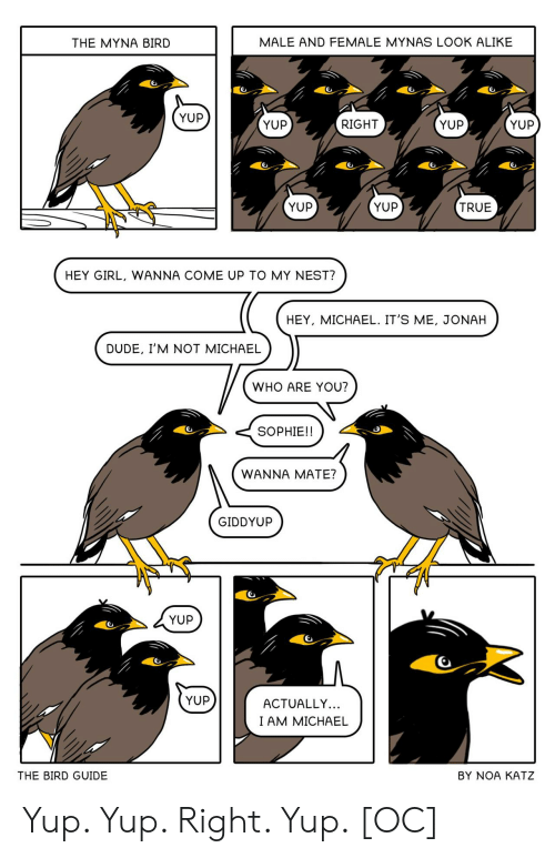Come Up: MALE AND FEMALE MYNAS LOOK ALIKE  THE MYNA BIRD  YUP  YUP  YUP  RIGHT  YUP  YUP  YUP  TRUE  HEY GIRL, WANNA COME UP TO MY NEST?  HEY, MICHAEL. IT'S ME, JONAH  DUDE, I'M NOT MICHAEL  WHO ARE YOU?  SOPHIE!!  WANNA MATE?  GIDDYUP  YUP  YUP  ACTUALLY...  I AM MICHAEL  THE BIRD GUIDE  BY NOA KATZ Yup. Yup. Right. Yup. [OC]