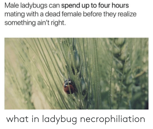 Can, They, and What: Male ladybugs can spend up to four hours  mating with a dead female before they realize  something ain't right. what in ladybug necrophiliation