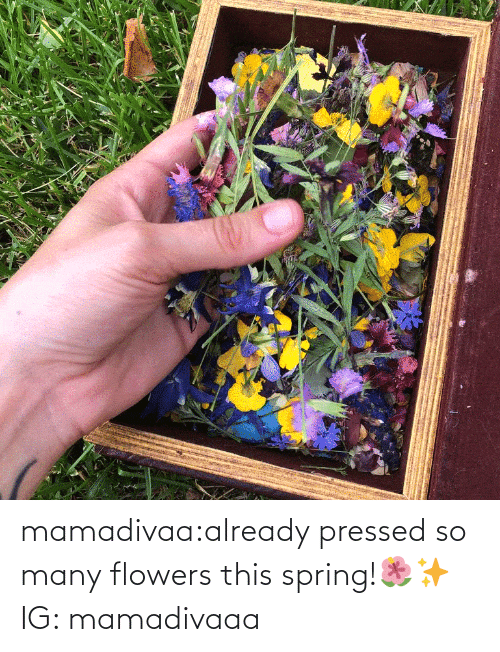 Flowers: mamadivaa:already pressed so many flowers this spring!🌺✨ IG: mamadivaaa