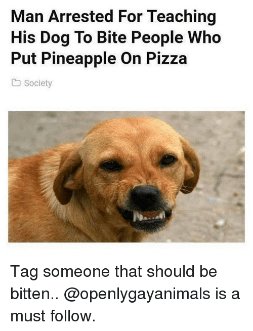 Memes, Pizza, and Pineapple: Man Arrested For Teaching  His Dog To Bite People Who  Put Pineapple On Pizza  society Tag someone that should be bitten.. @openlygayanimals is a must follow.