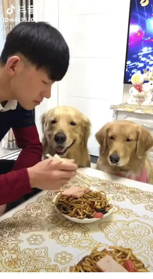 Dogs, Saw, and Man: Man is eating noodles and dogs saw the man