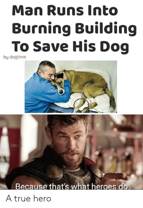 True, Heroes, and Hero: Man Runs Into  Burning Building  To Save His Dog  by dogtime  Because that's what heroes do A true hero