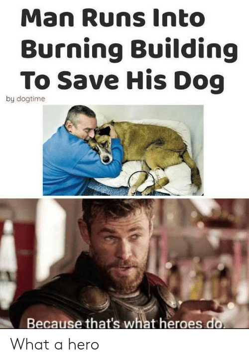 Heroes, Hero, and Dog: Man Runs Into  Burning Building  To Save His Dog  by dogtime  Because that's what heroes do What a hero