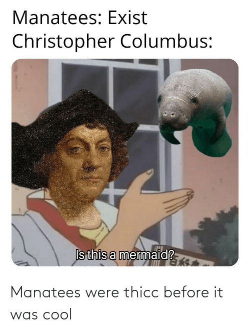 thicc: Manatees were thicc before it was cool