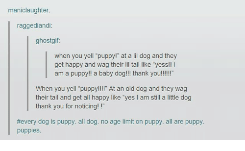 """Puppies, Thank You, and Happy: maniclaughter  raggediandi:  ghostgif:  when you yell """"puppy!"""" at a lil dog and they  get happy and wag their lil tail like """"yess!! i  am a puppy!! a baby dog!!! thank you!!!""""  When you yell """"puppy!!!"""" At an old dog and they wag  their tail and get all happy like """"yes I am still a little dog  thank you for noticing!!""""  #every dog is puppy. all dog. no age limit on puppy, all are puppy  puppies"""