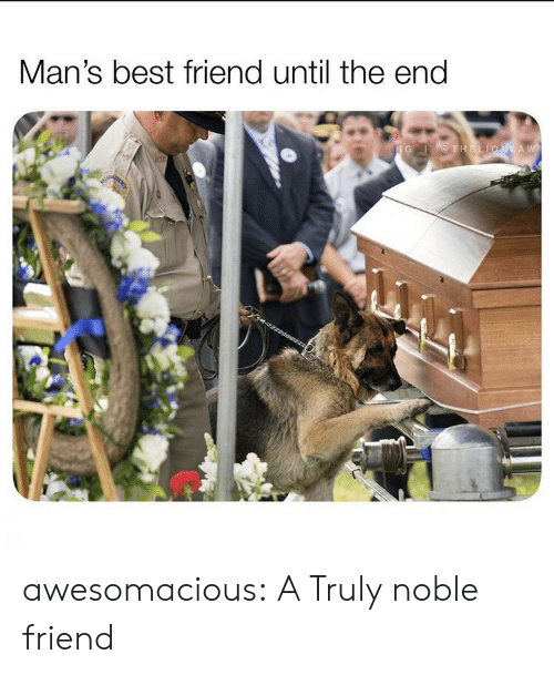 Best Friend, Tumblr, and Best: Man's best friend until the end  IG THELIONLAW awesomacious:  A Truly noble friend
