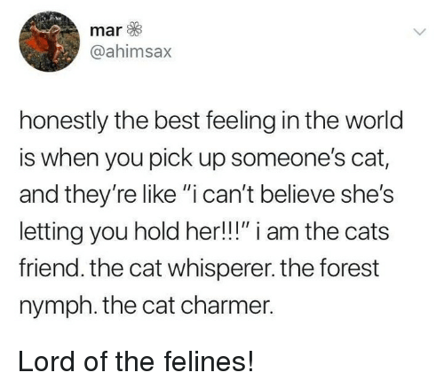 """Cats, Memes, and Best: mar  @ahimsax  honestly the best feeling in the world  is when you pick up someone's cat,  and they're like """"i can't believe she's  letting you hold her!!!"""" i am the cats  friend. the cat whisperer. the forest  nymph. the cat charmer. Lord of the felines!"""