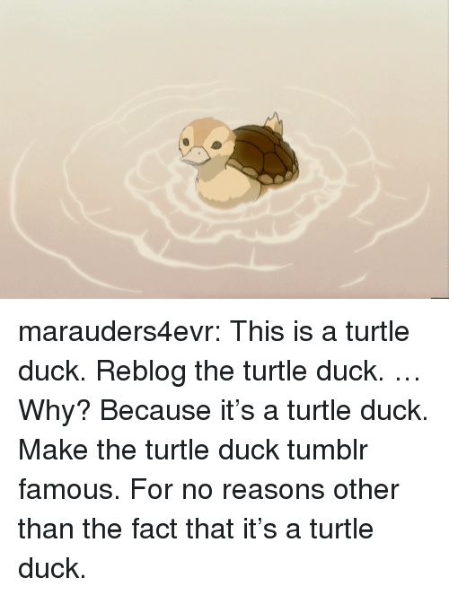 Target, Tumblr, and Blog: marauders4evr:  This is a turtle duck. Reblog the turtle duck. … Why? Because it's a turtle duck. Make the turtle duck tumblr famous. For no reasons other than the fact that it's a turtle duck.