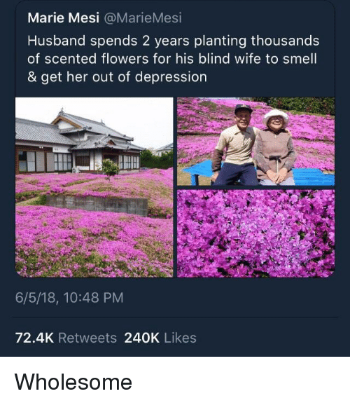 Smell, Depression, and Flowers: Marie Mesi @MarieMesi  Husband spends 2 years planting thousands  of scented flowers for his blind wife to smell  & get her out of depression  6/5/18, 10:48 PM  72.4K Retweets 240K Likes <p>Wholesome</p>