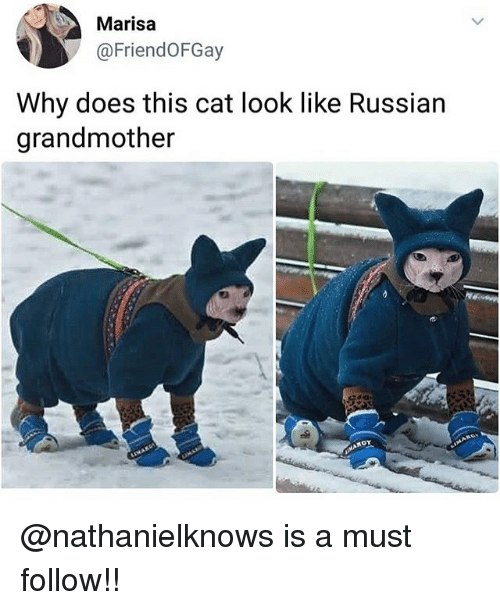 Memes, Russian, and 🤖: Marisa  @FriendOFGay  Why does this cat look like Russian  grandmother @nathanielknows is a must follow!!