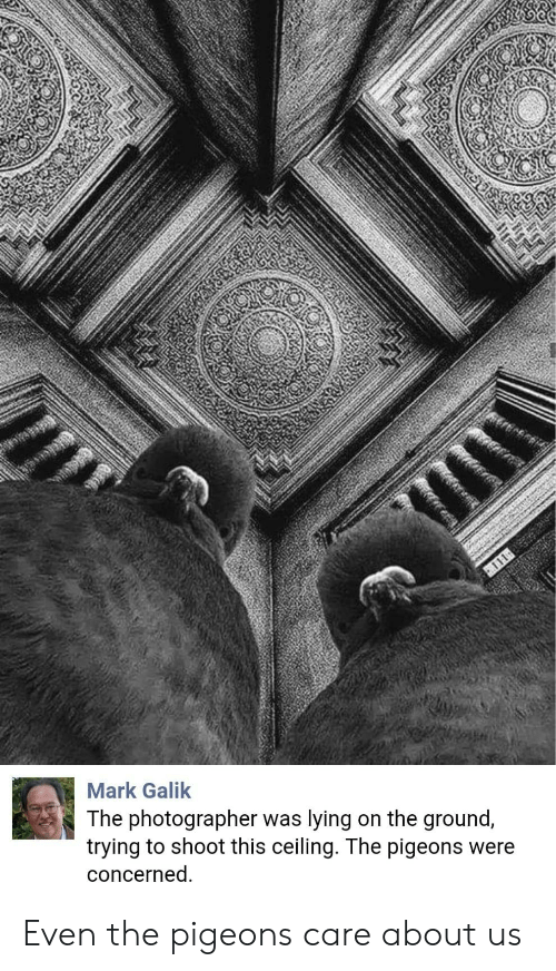 Lying, This, and Concerned: Mark Galik  The photographer was lying on the ground,  trying to shoot this ceiling. The pigeons were  concerned Even the pigeons care about us