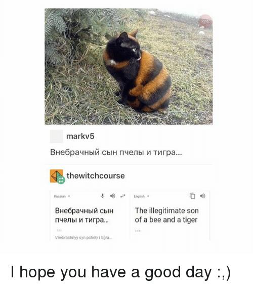 Tumblr, Good, and Tiger: markv5  thewitchcourse  English  4)  Russian  BHe6payH  The illegitimate son  of a bee and a tiger  In cbi  Vnebrachnyy syn pchely i tigra I hope you have a good day :,)