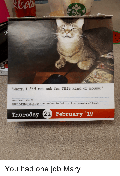 Mary I Did Not Ask For This Kind Of Mouse Name Max Age 2 Hobby Crank Calling The Market To Deliver Five Pounds Of Tuna Thursday February 19 Funny Meme On Conservative Memes
