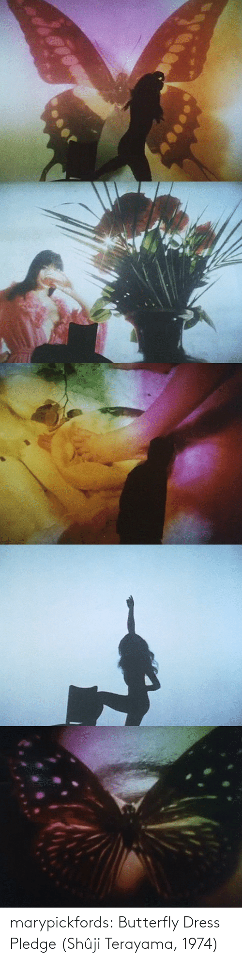 Butterfly: marypickfords: Butterfly Dress Pledge (Shûji Terayama, 1974)