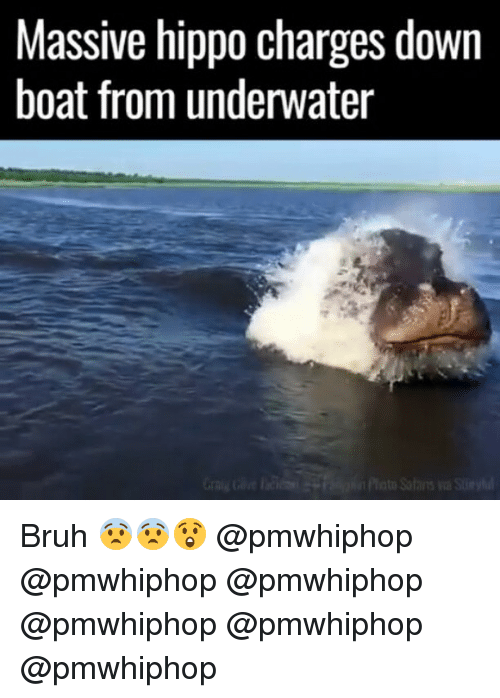 Hippoe: Massive hippo charges down  boat from underwater  itato Salans Bruh 😨😨😲 @pmwhiphop @pmwhiphop @pmwhiphop @pmwhiphop @pmwhiphop @pmwhiphop