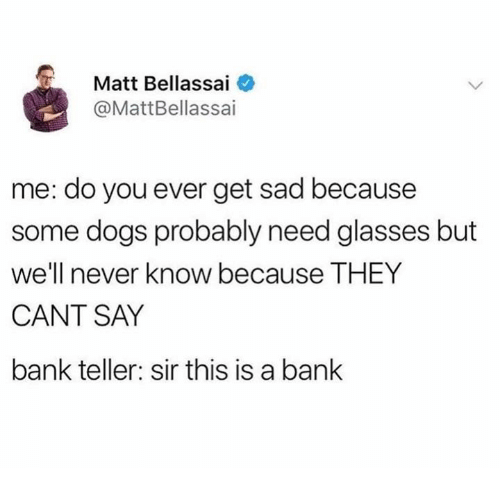 Dank, Dogs, and Bank: Matt Bellassai  @MattBellassai  me: do you ever get sad because  some dogs probably need glasses but  well never know because THEY  CANT SAY  bank teller: sir this is a banlk