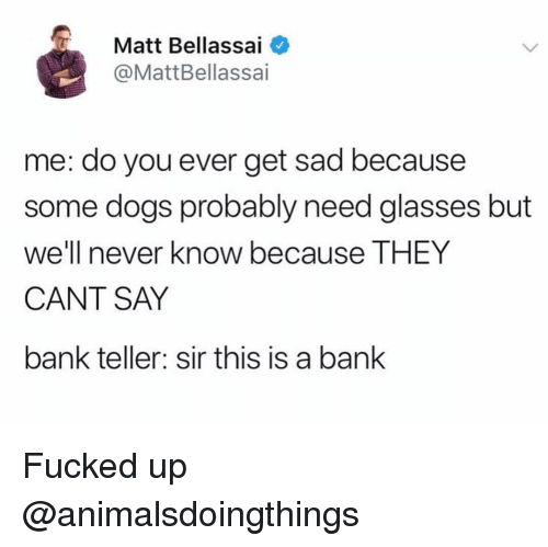 Dogs, Bank, and Glasses: Matt Bellassai  @MattBellassai  me: do you ever get sad because  some dogs probably need glasses but  we'll never know because THEY  CANT SAY  bank teller: sir this is a bank Fucked up @animalsdoingthings