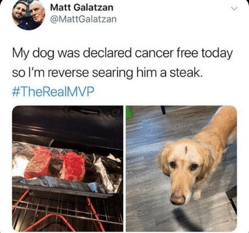 Dank, Cancer, and Free: Matt Galatzan  @MattGalatzan  My dog was declared cancer free today  so I'm reverse searing him a steak.