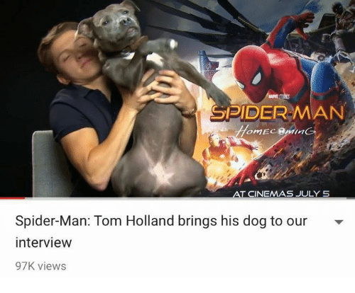 Spider, SpiderMan, and Dog: MAVE  SPIDER MAN  CINEMAS JULY S  Spider-Man: Tom Holland brings his dog to our  interview  97K views