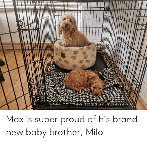 brand new: Max is super proud of his brand new baby brother, Milo